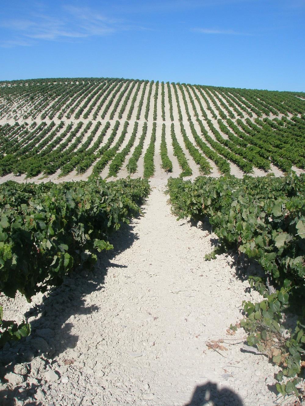El célebre Pago Macharnudo, de 56 hectáreas, se encuentra a 5 kilómetros al noroeste de Jerez, en el centro de la comarca, en la mejor zona del Jerez Superior. A 135 metros sobre el nivel del mar y orientado al suroeste, tiene una pendiente del 10%, destacando su singular tierra […]